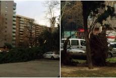 Fuertes rachas de Viento y Lluvia en Zaragoza